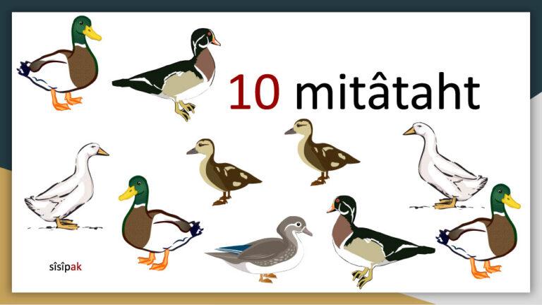 akihtâsona-numbers1024_13