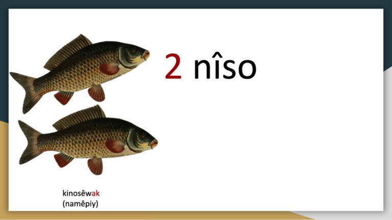 akihtâsona-numbers1024_5