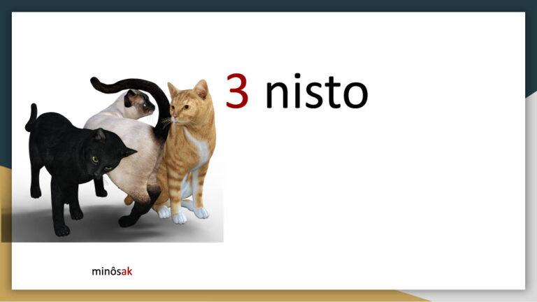 akihtâsona-numbers1024_6